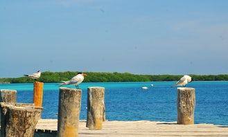 Book the Private Island Of Contoy Tour with Us!