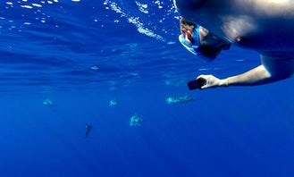 Swim With Dolphins 2H Private Whale Watching Tour from Funchal for 350€