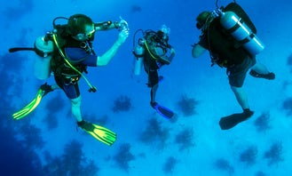 Two dives for certified divers in Fujairah
