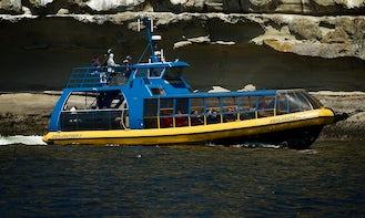 Explorathor II (Open Zodiac Vessel) Whale Watching in Richmond